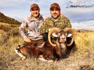 Iberian Mouflon Hunting in Spain