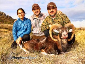 Iberian Mouflon Hunting in Spain