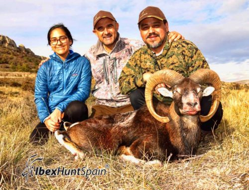 Iberian Mouflon I Hunting Mouflon in Spain