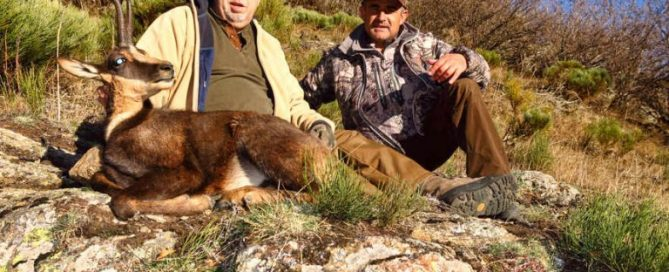Pyrenean Chamois Hunting in Spain