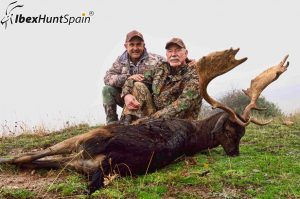 Fallow deer hunting in Spain