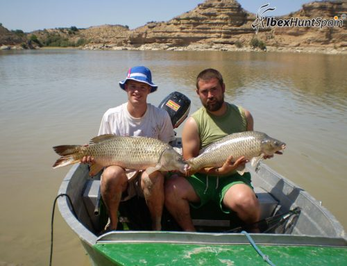 Carp fishing on The river Ebro | Fishing Carps in Spain