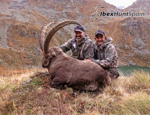 Alpine Ibex hunting in Switzerland by E.Wietfeld